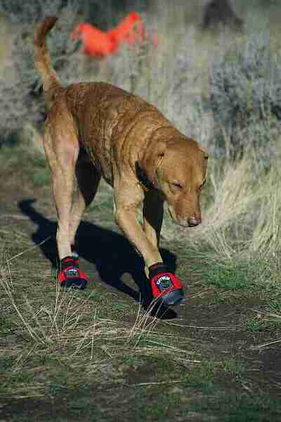 hunting dog boots