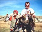 Montana Pheasant Opener - A mixed bag of pheasants and sharptail grouse taken in northeast MT on opening day.